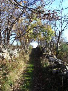photo d'un chemin pour illustrer la randonnée